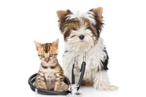 Assurance santé animaux